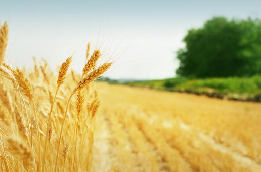 Growers advised to assess all crops' yield potential.