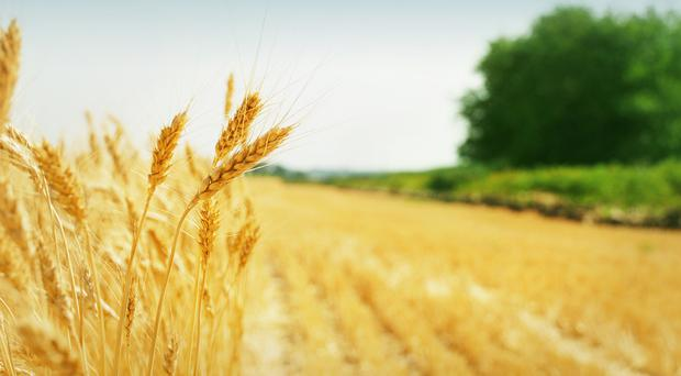 Insurance hikes are driving up crop costs