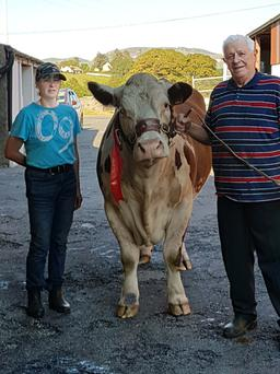 Pauline Casey and her dad, Peter, with one of the star Hereford cows in the herd.