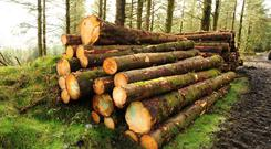 Forestry: a fall back income