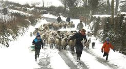 The Kavanagh family from Drumphea Co Carlow, moving sheep from fields into shelter ahead of the arrival of storm Emma last March. Photo: Finbarr O'Rourke