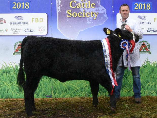 Jason Reilly, Drumgowla, Cloone, Co Leitrim with his All Ireland Irish Angus Junior Heifer Champion.