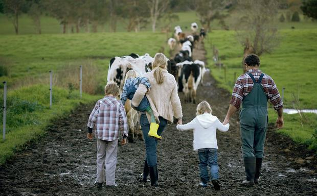 Majority of dairy farmers said potential marital breakdown of their successor was one of their biggest concerns. Stock image.