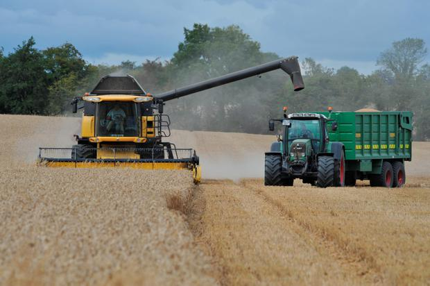 Global wheat production is estimated to be down by 5pc