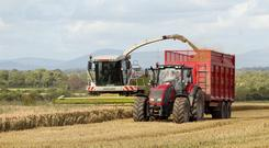 'The demand for fodder and forage has resulted in massively increased straw prices'
