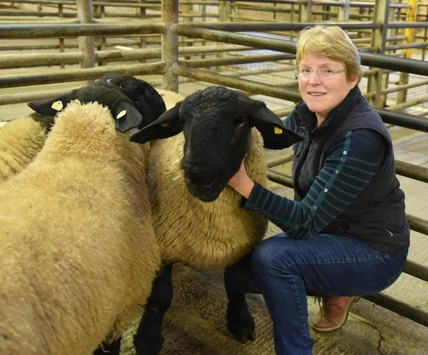 Sarah O'Neill, of Camolin, Co Wexford with her Suffolk rams at the multi-breed sale in Roscrea