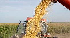 China has started buying more soy beans from Brazil.