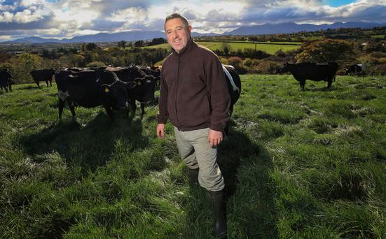 Ed O'Sullivan has switched from a suckler herd to milking 80 cows on his Co Kerry farm. Photo: Valerie O'Sullivan