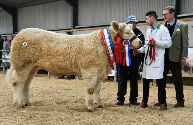 Michael and Cathal Daly, Wardhouse, Tullaghan, Co Leitrim with Junior Champion Heifer, Tullaghan Nova, SOLD FOR €6,800 and show judge, Chris Curry.