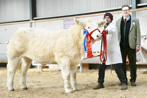 James Dunne, Corporation Lands, Belturbet, Co Cavan and Chris Curry, judge, with the Reserve Junior Heifer, Kilduff Nikita, the price topper at €7,500 at the Irish Charolais Cattle Society Elite Heifer Show and Sale at Tullamore on Saturday.