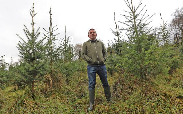 Putting down roots: Brendan Lynch on his planted land in Carrigallen, Co Leitrim. Photo: Lorraine Teevan