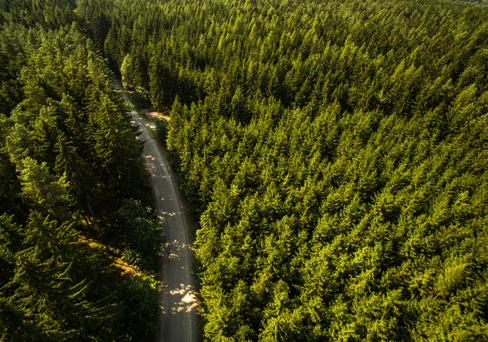 Keep on track: Establishing a proper road early in a forest's development will help you to improve the quality and value of the crop