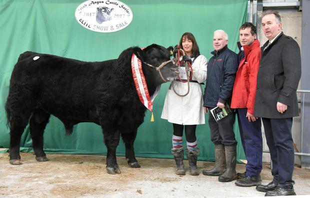 Price topper at the Irish Angus Elite Show 2017, Champion Angus Bull of the Show, Drumcrow Night Rider, exhibited by Frank McKiernan, Lacken Lower, Ballinagh, Co. Cavan which sold for €7,000 with Muirne McKiernan, Tony Flaherty, Red Mills, sponsors, John Farrell, President, and Gerard Hogan, judge.