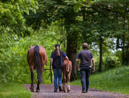 There is a major shortage of young people entering the Irish horse breeding industry