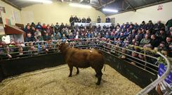Hundreds of farmers attended the finale of Raphoe Mart's season last Friday