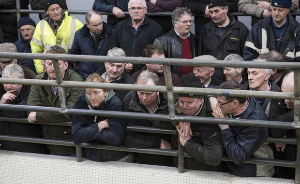 Farmers contemplating the future at Castlerea Mart. Photos: Kevin Byrne