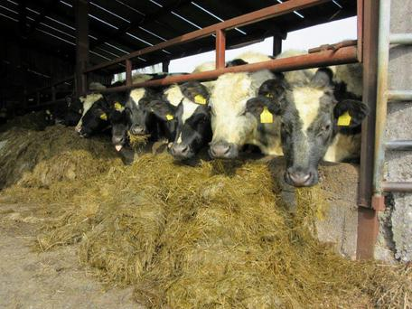 A 10pc fodder deficit would equate to two weeks feeding over a five-month winter