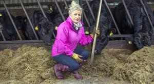 Bernie MacCarthy tends to her Angus herd on her farm near Kilbeggan in Westmeath. Photo: Tony Gavin