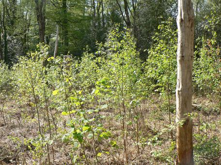 There are a wide range of forestry grant options available from native woodland. Photo: Teagasc