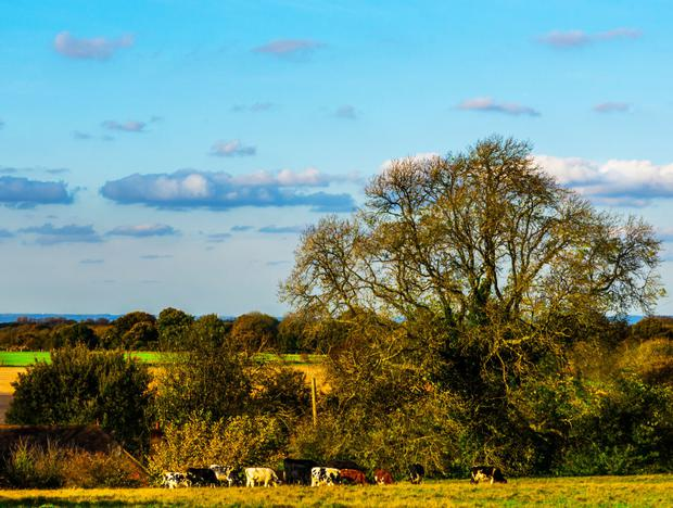 Operating a farm business as a limited company is increasing among dairy farmers and larger tillage and drystock enterprises.