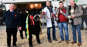 Shane McKiernan, with Overall Champion of the Show, Drumcrow Prosecco exhibited by Margaret Mc Kiernan, Drumcrow, Corlismore, Co Cavan receiving the Midland and Western Livestock Improvement Society Trophy from Shane Kilraine, President, and the Irish Aberdeen Angus Championship from Mack Crowe, President, Irish Aberdeen Angus Society with Joe Moran, judge.