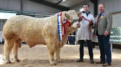 Martin Ryan from Copperfield House, Cabra, Thurles and show judge David Connolly with Goldstar Nostradamus, Senior Champion at the Charolais Society Show and Sale at Tullamore.