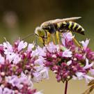 A succession of reports have identified an alarming decline in pollinator and insect numbers