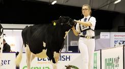Doireann Mulhall is one of the leading showers and young judges of Holstein Friesian stock