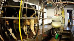 Dairy farmers are burning the midnight oil at this time of year