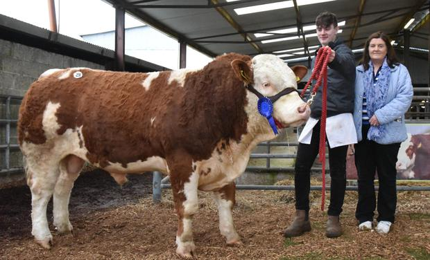 Conor and Margaret Maher, Newport, Co Tipperary with their prizewinning bull, Ballykin Jacob at the Irish Simmental Cattle Society Show and Sale at Roscommon.