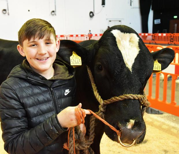 Daniel Healy of Mylane, Ovens, Co Cork with his father Michael Denis's Holstein bull, Mylawn Marvellous, at the Multi-breed Bull Show and Sale at Kilkenny.