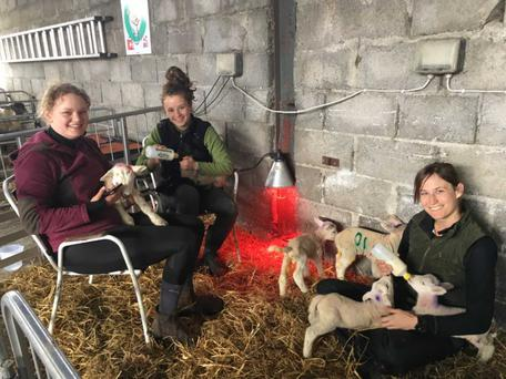 Nelly Buschke from Germany, Maria Rocadembosch from Catalonia and Rachel Shimko from California, USA, feeding lambs on John Fagan's farm in Gartlandstown, Co Westmeath. They are working and living on the farm as as part of the World Wide Opportunities on Organic Farms (WWOOF) scheme.
