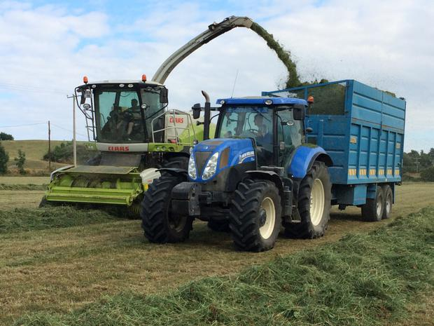 The Kirwans 151-registered Claas Jaguar 860 picking second cut silage