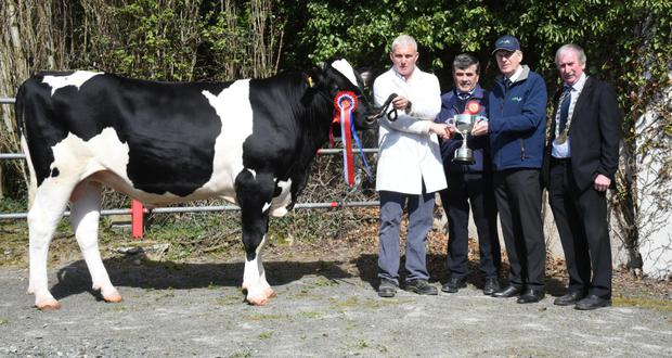 Rickey Barrett, The Elms, Adamstown, Ballinhassig, Co Cork receiving the Overall Championship Trophy for Laurelm Daffy 2 from Charles Gallagher, CE, IHFA with Tom Murphy, judge and Peter Kenneally, President IHFA