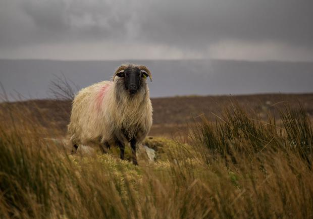 Farmers that work Ireland's spawling upland areas have raised concerns in relation to land access and issues around liability. Photo: Brian Joyce