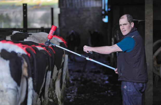 The Tail Painter&.the Agrify Tailpainter, designed by Liam OKeeffe, Dairy farmer, from Ballydesmond, Co Cork. Photo:Valerie OSullivan