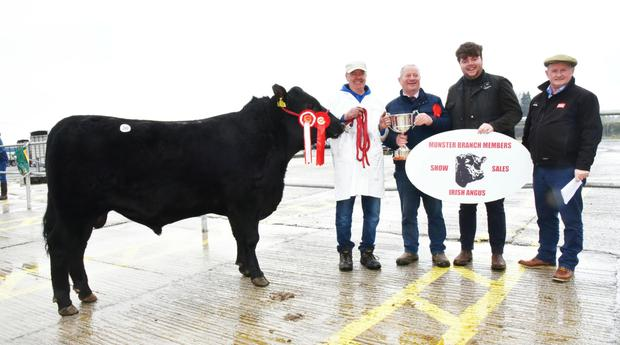 Martin Hehir, Killernan, Miltown Malbay, Co Clare receiving the Supreme Champion of the Show trophy for Killernan Pete, with James Boyce, handler, Pat Noonan, Chairman, Munster Branch Irish Angus, and Aidan Moloney, Chief Steward.