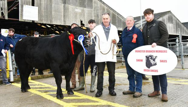 Beryl Paddy, Reserve Champion and price topper at the Munster Branch Irish Angus Bull Show and Sale at Kilmallock on Saturday which sold for €4,200, with Gerard Hogan, Comea, Kilfeacle, Co Tipperary, exhibitor, Joe Moran, judge and Pat Noonan, Chairman, Munster Branch Irish Angus.