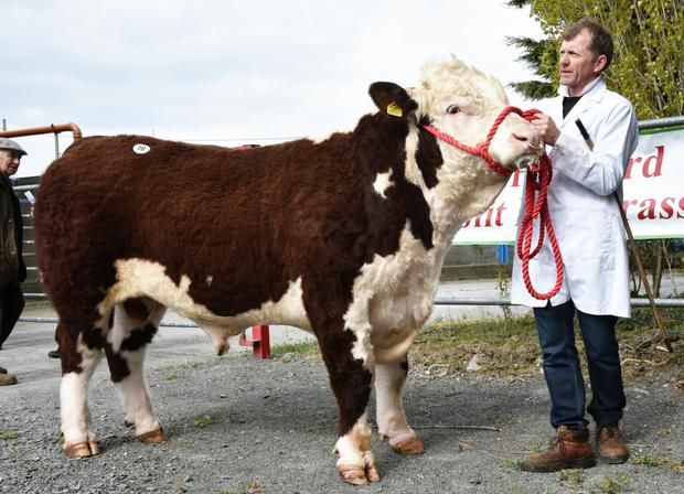 Coman Neary of Clooncullane, Strokestown, Co Roscommon with his first prizewinner, Clooncullane Captain.