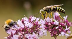 The aim of the award is to reverse the drop in our numbers of bees, which are crucial for plant pollination