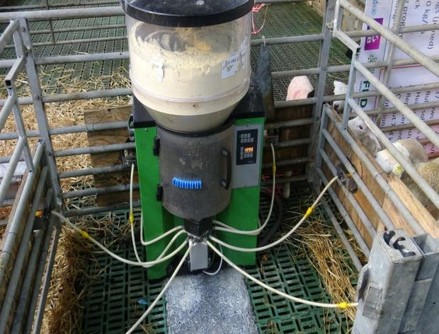 A fully automated feeder system can rear up to 250 lambs per unit and costs approximately €3,500