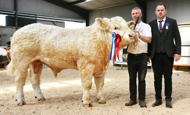 William Flynn, Tullyvillage, Newbridge, Ballinasloe, exhibitor, with Reserve Senior Champion, Tullyvillage Netherville and Darragh McManus, judge.