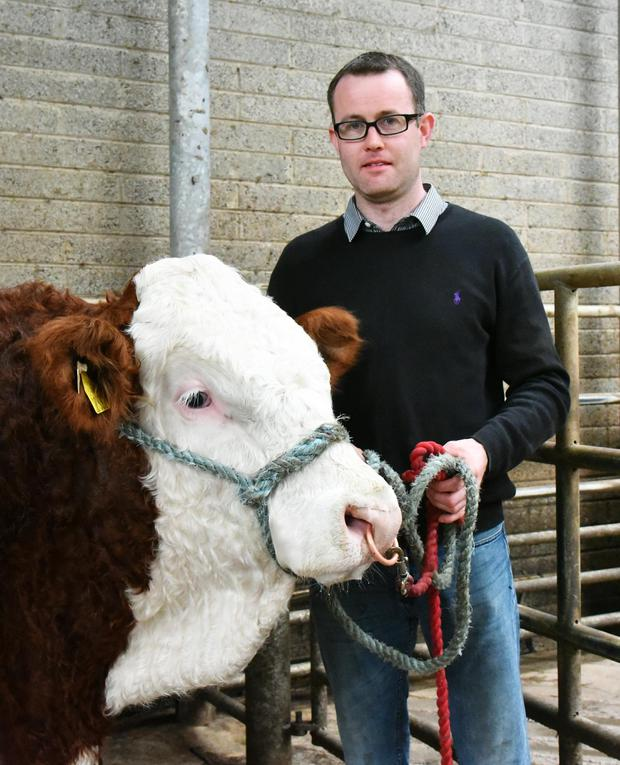Byran Fleming, The Swan, via Athy, Co Laois with his Simmental bull, Theswan Krixus at Kilkenny.