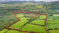 Green fields: The holding is located at Greenanemore near Rathdrum in the heart of Wicklow