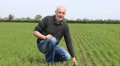 Converted: Fergal Byrne switched to organic farming five years ago and says it's been the best decision of his farming career