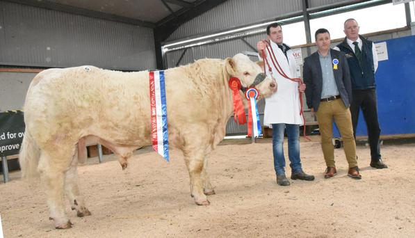 Goldstar Oasis, Overalll Champion of the Show at the Irish Charolais Cattle Society Bull Show and Sale at Tullamore, with Martin Ryan, Copperfield House, Cabra, Thurles, Co Tipperary (exhibitor), Paddy McCabe (judge) and Noel McGoldrick (President, Irish
