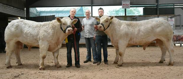 Patrick McClean, Roughan, Newtowncunningham, Lifford, Co Donegal (centre) with double prizewinners, Roughan One and Roughan Once sold for €9,400 at the Irish Charolais Cattle Society Bull Show and Sale at Tullamore on Saturday and handlers, Kieran McLough