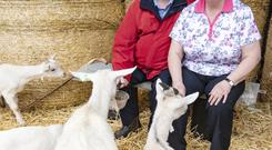 Jimmy and Elizabeth Lennon from Moydrum, Athlone have raised over a 1,000 goats for the charity organization, Bóthar. Photo Kevin Byrne