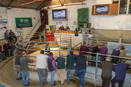 Tagging issue: A general view of the sheep sale at New Ross Mart yesterday. Photo: Siobhan English