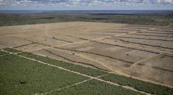 Areas of Brazil's Cerrado have been deforested for soy production (Marizilda Cruppe/Greenpeace/PA)